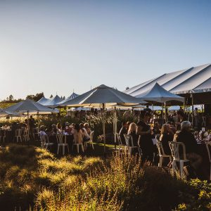 Outdoor festival at the edge of the vineyard under umbrellas